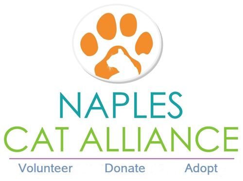 Image result for naples cat alliance